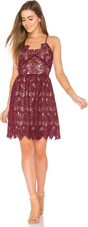 Joa , Fit And Flare Lace Dress